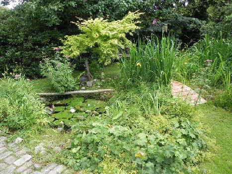 Naturteich for Naturteich pflanzen